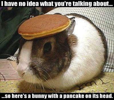 Bunny_with_Pancake.jpg