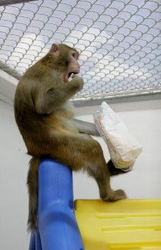 MonkeyPopcorn.jpg
