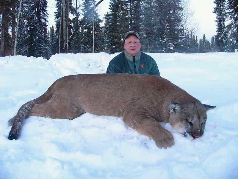 Largest cougar