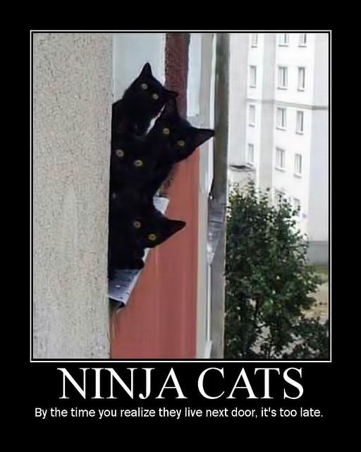 NinjaCats.jpg