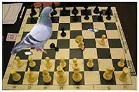 PigeonChess.jpg
